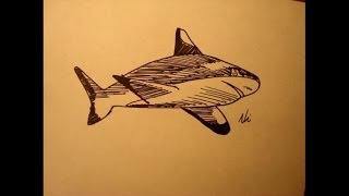 How To Draw A Shark|Easy|Step By Step|Cartoon|For Beginners|Head|Attack