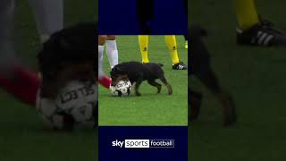 Dog nutmegs players with 'paw'some skills! 🐶