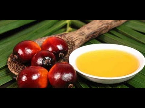 THE REASON WHY YOU SHOULD AVOID PALM OIL