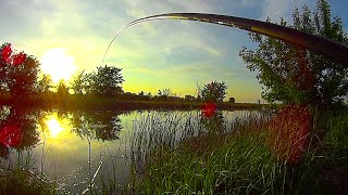 УДОЧКА ТРЕЩИТ БЕШЕНЫЙ КЛЕВ УХ ЭТО НАДО ВИДЕТЬ Рыбалка на поплавок