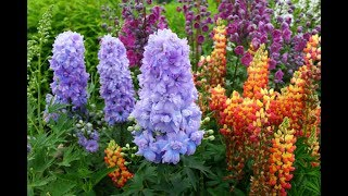 видео Красивый сад: правила создания и основные составляющие сада (фото)