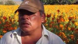 La Flor de Cempazúchitl - Día de Muertos