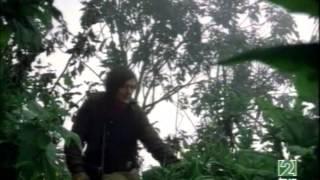 Gorilas en la Niebla - Las Imágenes Perdidas de Dian Fossey - Documental Completo