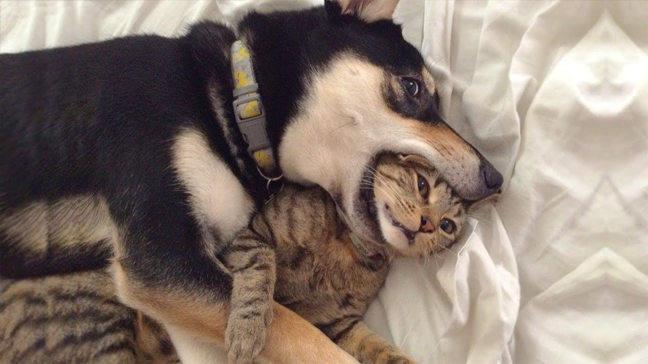 Cute is Not Enough - Funny Cats and Dogs Compilation #257