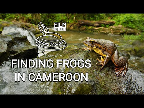 Finding frogs in Cameroon (wildlife documentary)
