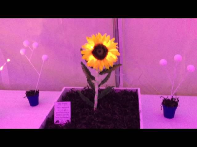 Flora: Digital Greenhouse