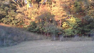 Watching And Waiting For Bigfoot Sasquatch At Sunrise