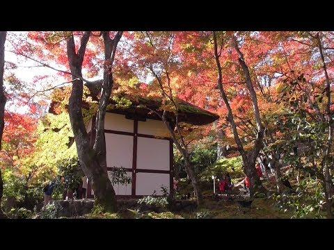 京都 紅葉の常寂光寺 Jojakko-ji (temple) in autumn leaves, Kyoto