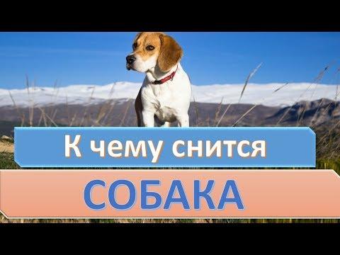 К чему снится собака (щенок) | СОННИК