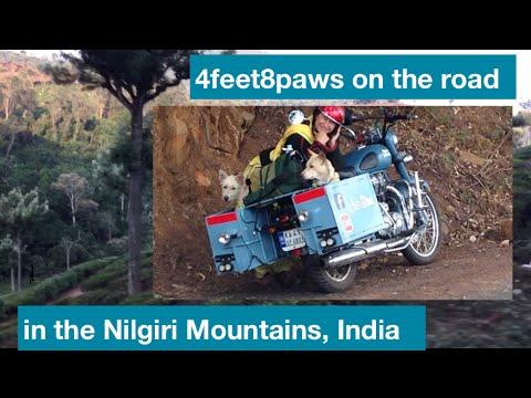 4feet8paws on the road: in the Nilgiri Mountains, Tamil Nadu, South India