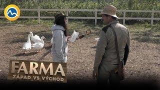 FARMA - Farmárom zmizla jedna hus, hospodár Martin bude nekompromisný: Kus za kus!