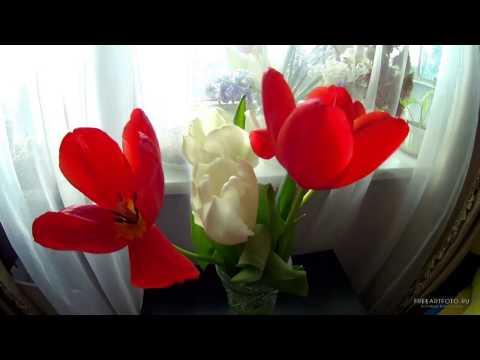 Тюльпаны на 8 е марта