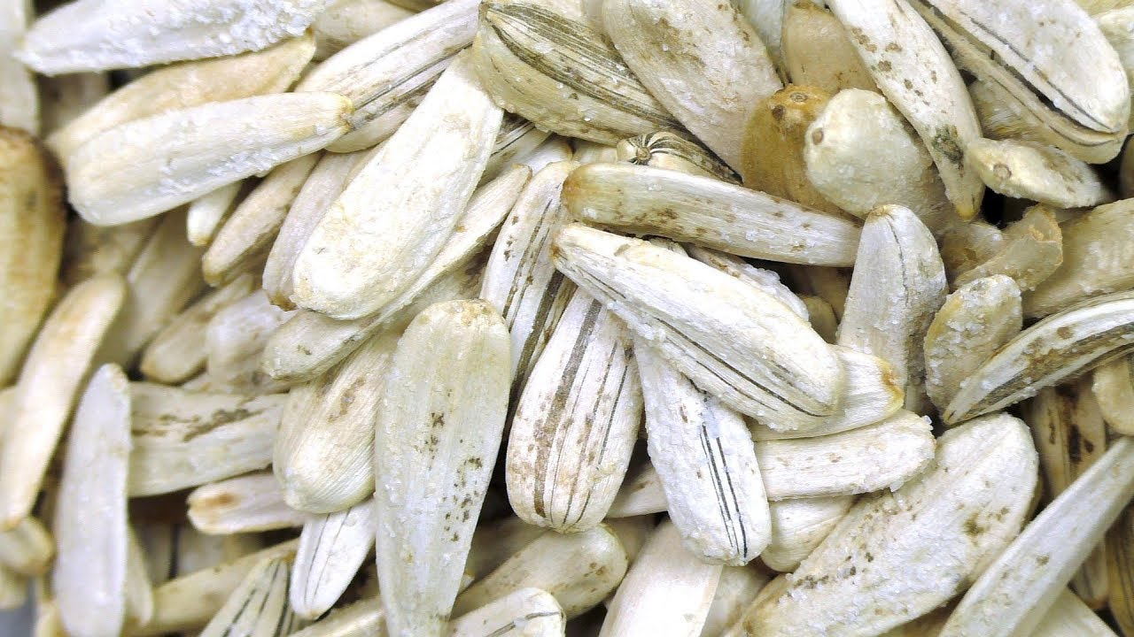 Sunflower Seeds with Shell YouTube