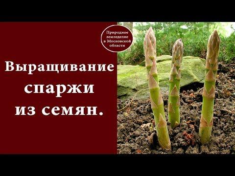 Выращивание спаржи из семян.