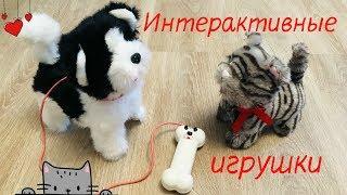 Интерактивные питомцы - собачка и котенок. Играю в игрушки.