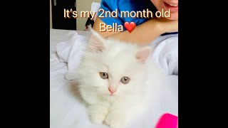 Persian cat (it's my 2nd month)🙌🏼