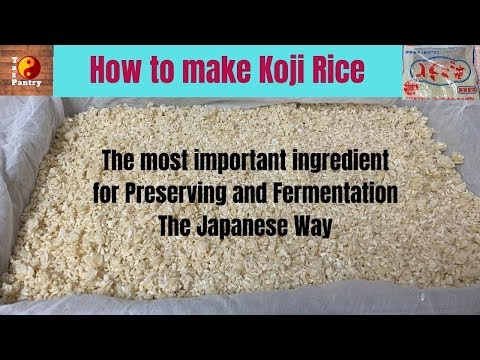 homemade-koji-rice- -cold-climate-using-heater-to-ferment