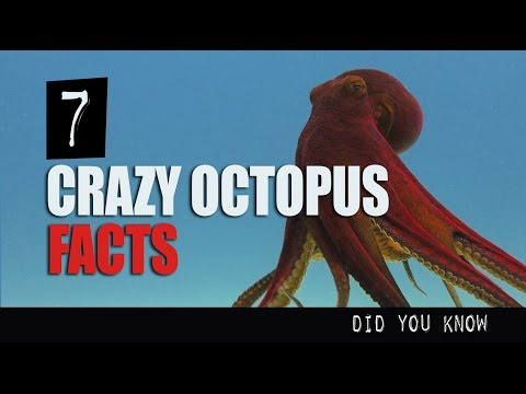 7 Crazy Octopus Facts