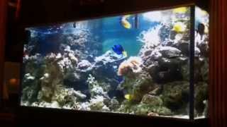 Морской аквариум - Аквариумная компания