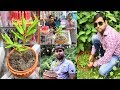 How to collect wild tree for home or shop decoration .....