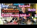 Cara Tips Toritorial Perawatan  Jenis Burung Jalak Khusus Yang Sibuk Bekerja  Mp3 - Mp4 Download