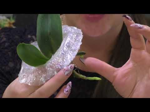 Салатовая орхидея! Приятные сюрпризы! Первые итоги реанимации!