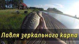 Ловля зеркального карпа. Рыбалка на платном озере. Лайфхак от Анютки: мега-вкусный прикорм для карпа(Культурно-рыболовное хозяйство «Зеркальный карп» http://www.zerkarp.ru Всем подписчикам нашего канала гарантируетс..., 2016-06-29T08:28:19.000Z)