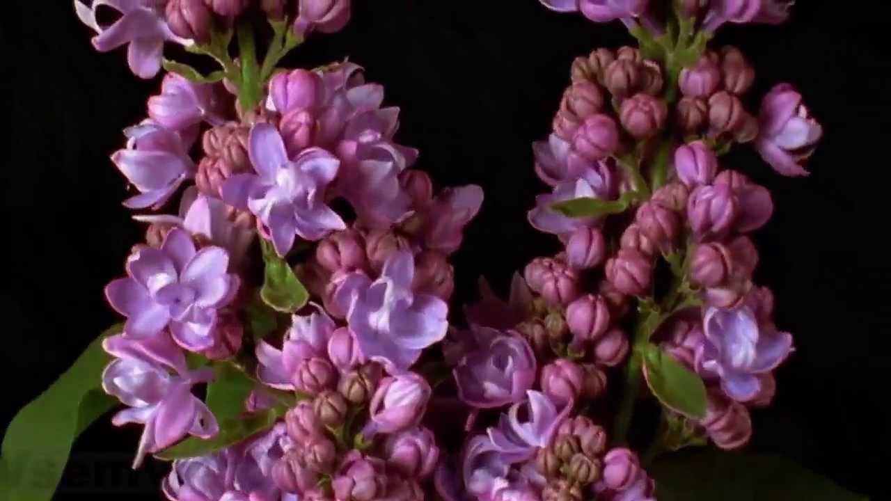 Красивые цветы фото живые