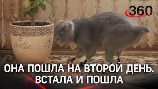 Хирург из Сибири сделал кошке лапки-протезы