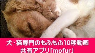 犬・猫専門のもふもふ10秒動画共有アプリ「mofur」