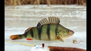 Рыбалка на реке СЕКЕРКА возле острова Свияжск