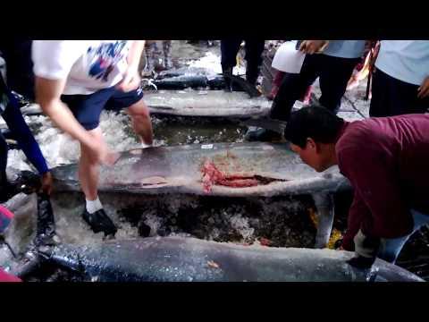 台東新港魚市場 - 旗魚拍賣 traditional fish market - black marlin - auction style in East Coast Taiwan