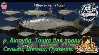 Русская Рыбалка 4. р. Ахтуба. Точка для ловли Сельди Кесслера, Шемаи, Пузонка.