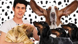 Cуперспособности обычных пород собак — ТОПЛЕС