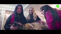 Romanian koirat