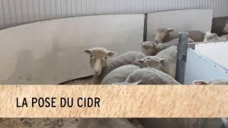 Utilisation du CIDR