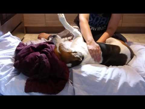Massage Videos SPIKE   Video #4