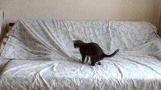 дрожь земли по-кошачьи / tremors - cat version