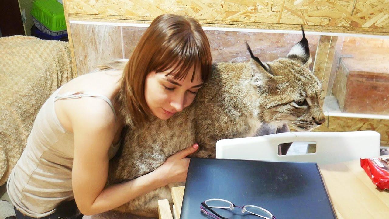Объявления о продаже для тех, кто хочет купить или взять бесплатно в хорошие руки котенка, кошку или кота в воронеже и области.