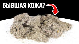 Думаете пыль в вашем доме в основном состоит из частичек кожи