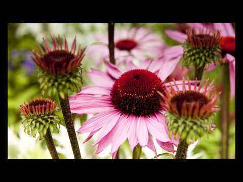✿ Happy little Flowers ✿ ~ Relax Music