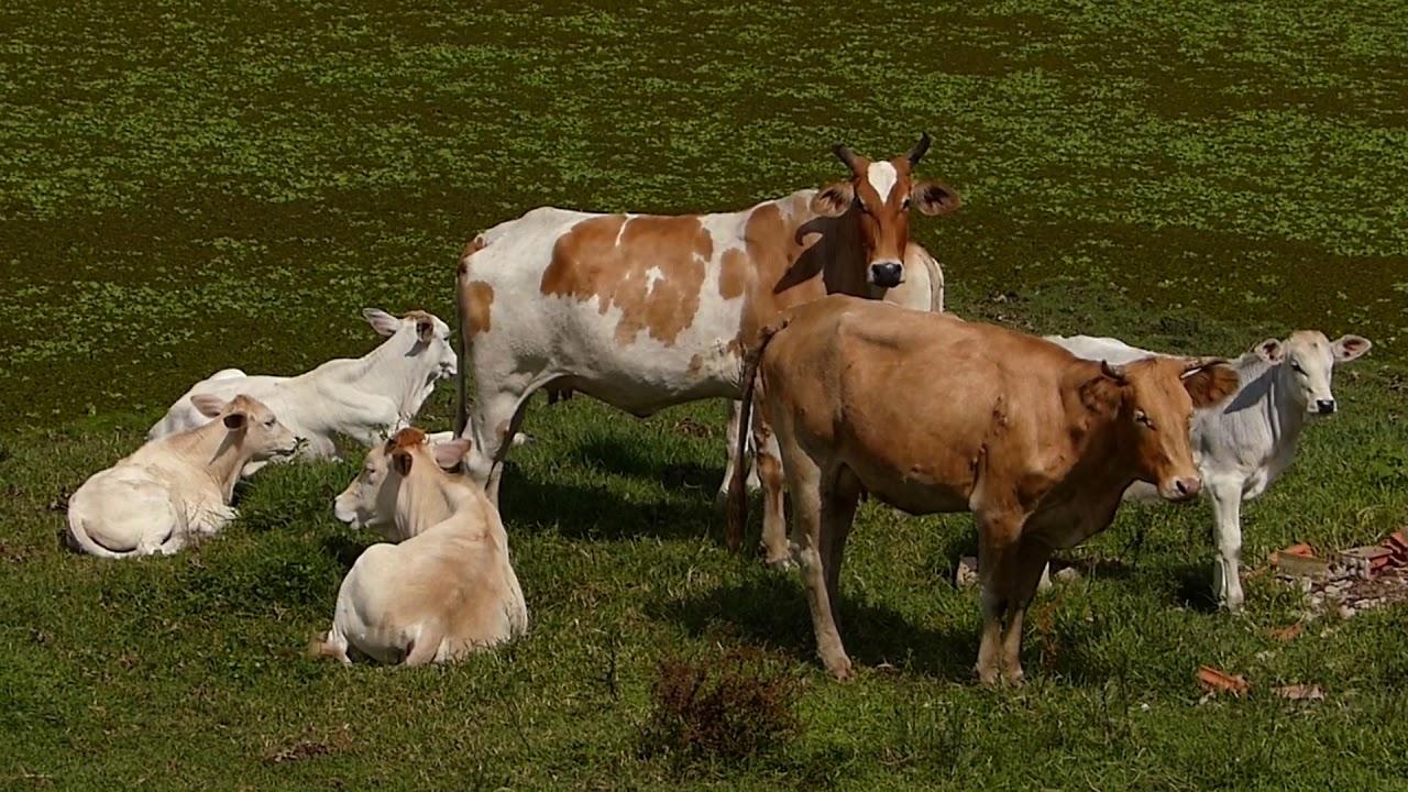 animais, fazenda sertaneja AMANHECER NO SÍTIO fauna e flora brasileira farm brazilian brasil