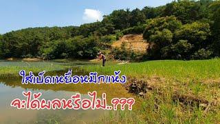 #ใส่เบ็ดเหยื่อหมึกแห้ง กับปลาเกาหลีจะมีตัวหรือไม่???ตามไปดูกันครับพี่น้อง