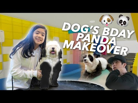 Download Youtube: DOG'S BIRTHDAY PANDA MAKEOVER | Ranz and Niana