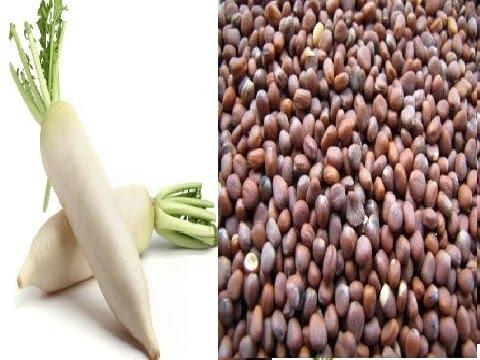 فوائد بذور الفجل للجنس ll تعرف على الفوائد المدهشة للبذور الفجل