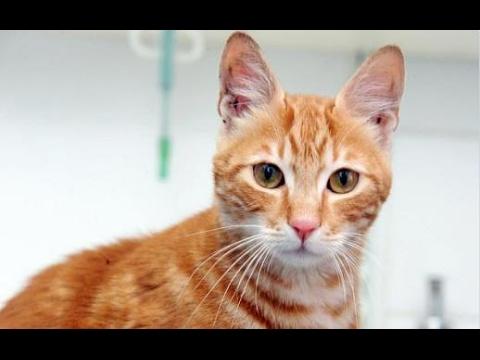 この猫、船に閉じ込められ17日間飲まず食わずでエジプトからイギリスに渡った末、保護される【感動する話】