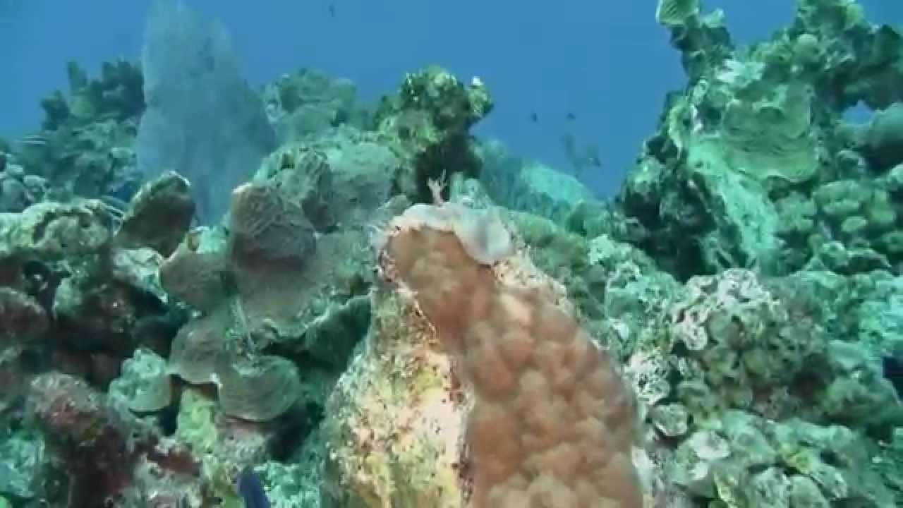 Turtle Reef Shore Dive, Grand Cayman I