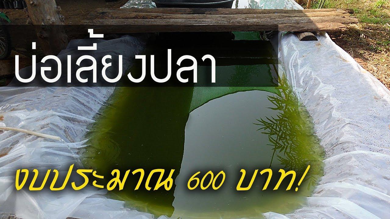 ทำบ่อเลี้ยงปลา 11 เมตร  ด้วยงบประมาณเพียง 600 บาท ไม่รวมค่าแรง