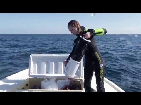 FWC Project: Sustainably Removing Lionfish