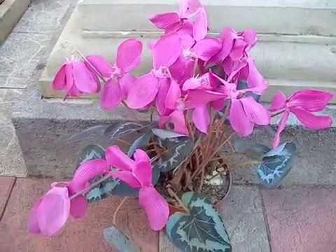Цветы колокольчики, простые, но прекрасные. Фото колокольчиков